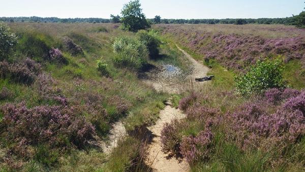 Moorland near Noorder Poort